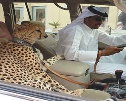 Sadece Dubai'de rastlayabileceğiniz 11 garip şey