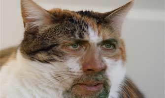 Kediler Nicholas Cage'e dönüşürse!