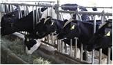 Hayvancılık Kredisi Nasıl Alınır
