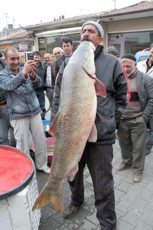 Nehirde dev turna balığı