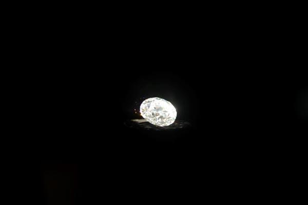 Dünyanın en büyük yuvarlak beyaz elması görücüye çıktı