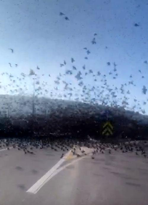 Son dakika: Çanakkale'de inanılmaz olay! Bir anda asfaltı kapladılar!