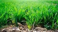 Milli Tarım Projesi Geliyor Eksikler Tamamlanıyor