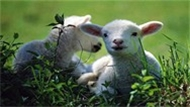 Hayvancılık Yapacaklara Müjde!