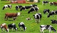Çiftçilere 300 Bin TL Hibe