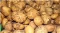 Tanzim satışlara patates Niğde'den gelecek!