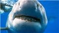 'Köpekbalığı' mucizesi! Kanser tarih mi olacak?