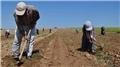 Kocaeli'de çiftçilere yıllık 34 milyon lira zirai gelir artışı