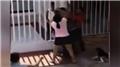 Kaçak elektrik saldırısı: Sallayıp düşürmeye çalıştı!
