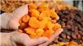Kuru meyve ihracatçısı Rusya'ya odaklandı