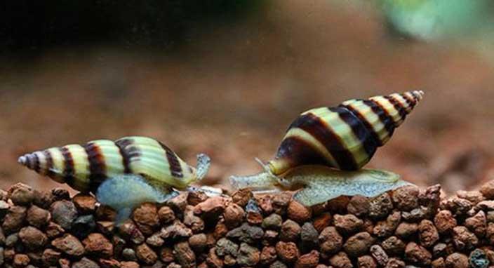 Pasifik Okyanusu'nda üç yeni balık türü keşfedildi