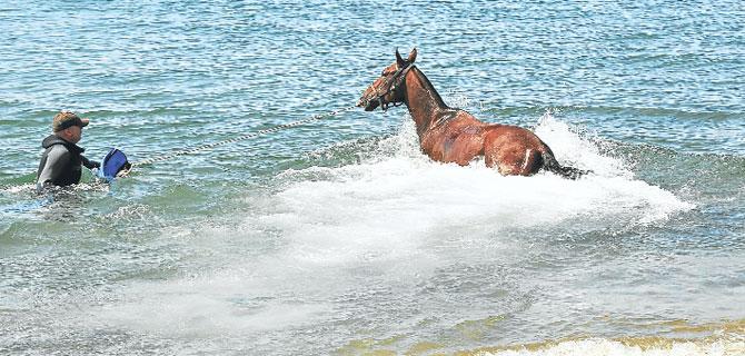 Yıldız atların tatil köyü