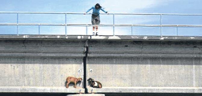 köprüde karşılaşan inatçı keçinin hikâyesi