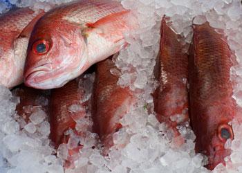 Balık nasıl saklanır?