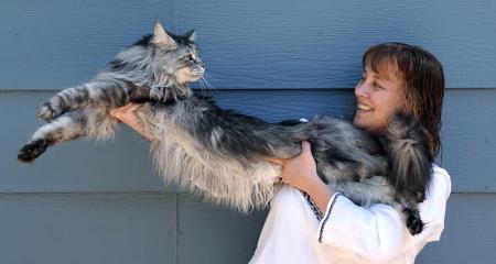 Dünyanın en uzun kedisi Stewie