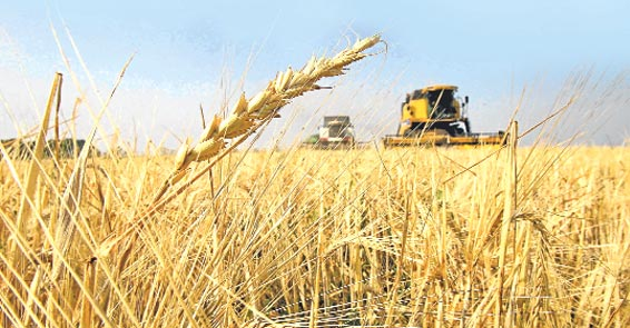 Buğday ithalatına 1 Mayıs'a kadar gümrük vergisi yok