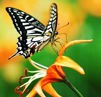 Tatil Önerisi: 210 Çeşit Kelebek ve Kaçkarlar