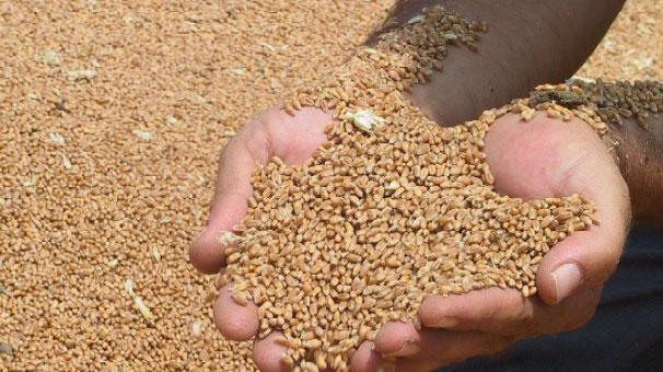 Trakya Birlik'ten ortaklarına sertifikalı buğday tohumluğu