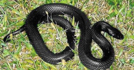 yılanlar ile ilgili görsel sonucu