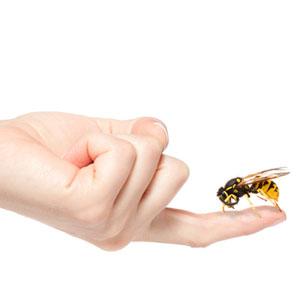 Bal ve eşek arısı sokması nasıl tedavi edilir?