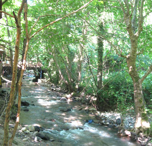 Marmara Bölgesi'nin serin ve huzurlu beldesi:Yuvacık