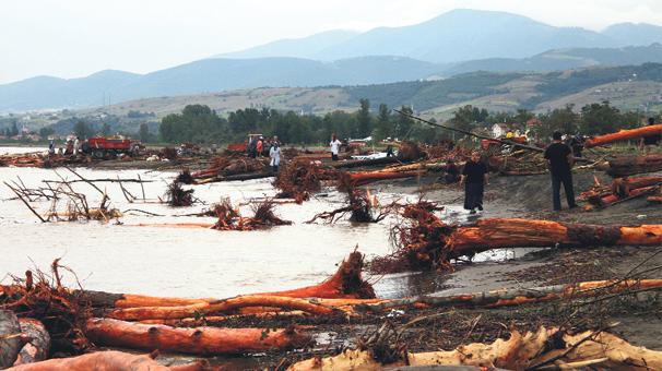 Sahil odun pazarı gibi
