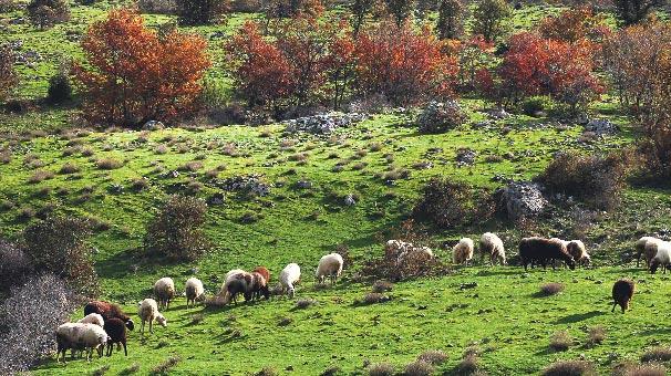 Türkiye'nin en büyük organik çiftliği