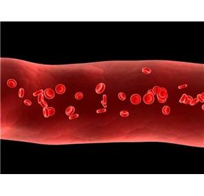 Kan plazması nedir?