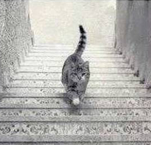 yeni ikilem kedi iniyor mu cikiyor mu  5515928 - Bu Kedi İniyormu ? Çıkıyormu ?