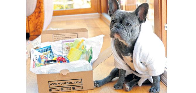 Evcil hayvanlar bu kutuları  çok seviyor