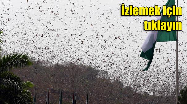Erdoğan'a tören alanında yarasa sürprizi