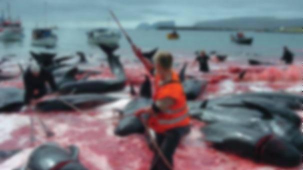 Japon balıkçılar Antartika'da 333 balinayı öldürdü
