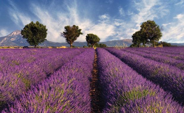 Lavanta kokuları eşliğinde Provence turu