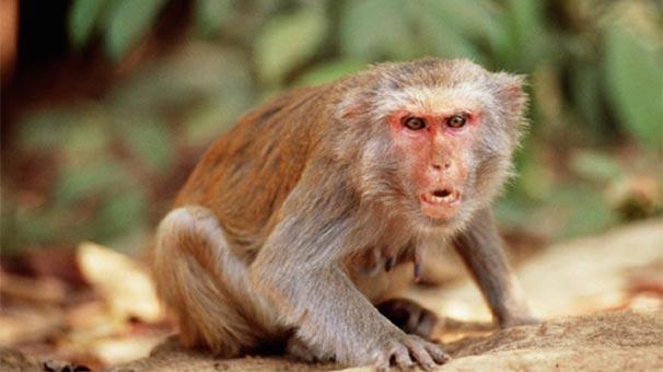 Dünyaca ünlü Iş Adamı Maymun Tarafından öldürüldü Son Dakika Haberleri