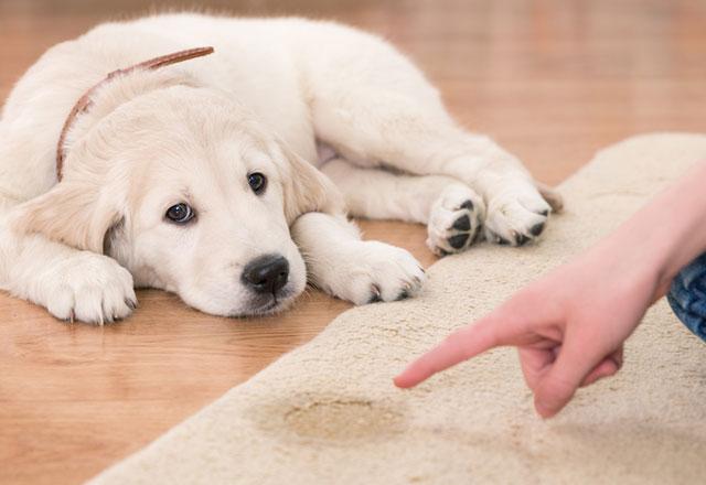 Köpek kokusu nasıl temizlenir?