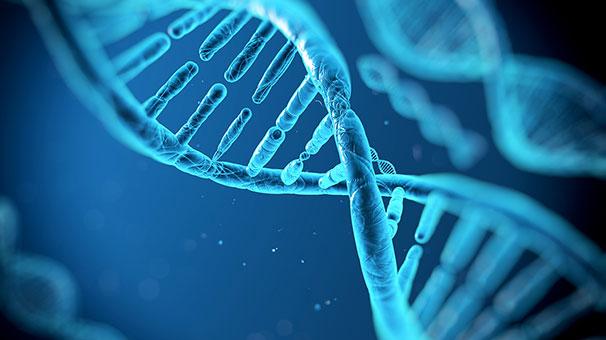 Kültürel farklar insan DNA'sına mührünü vuruyor