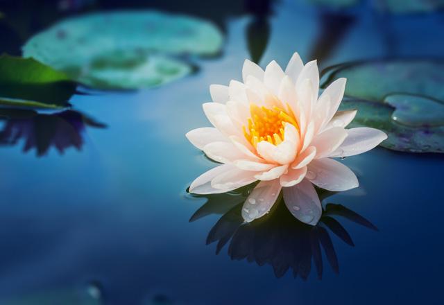 Çiçeğim Tatlısı Tarifi
