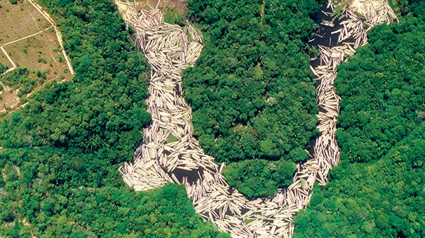 essays on deforestation of the amazon Deforestation Is a Threat to the Amazon