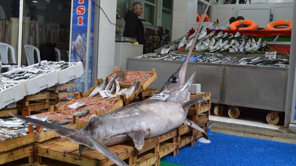 Marmara'da yaklaşık 2,5 metrelik kılıç balığı yakalandı