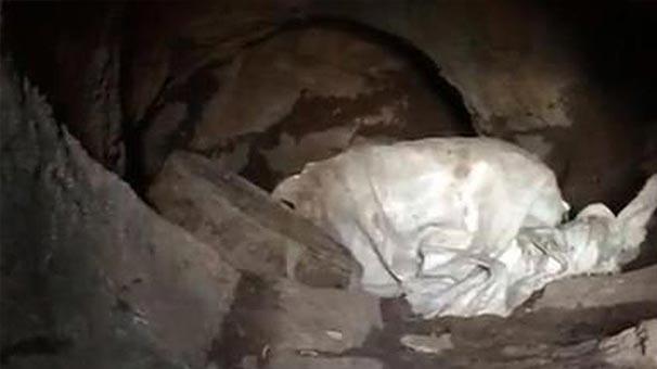 Mağaranın içi tamamen onlarla doluydu! Tespit edildiği gibi harekete geçildi