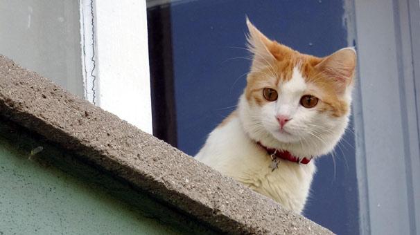 Kötü koku yayılan dairede kedi operasyonu