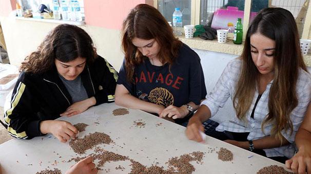 Yerli tohumların ıslahını üniversite öğrencileri yapıyor
