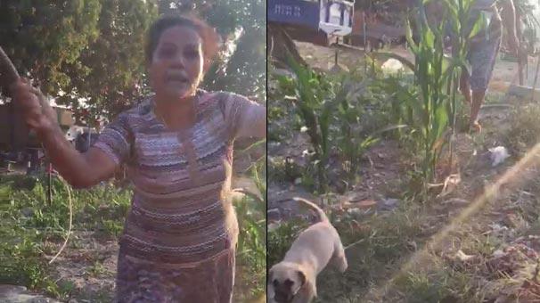 Yavru köpekleri odunla döven kadın serbest kaldı