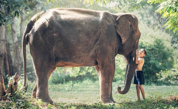 Hindistan fillerin safarilerde kullanımı yasaklıyor