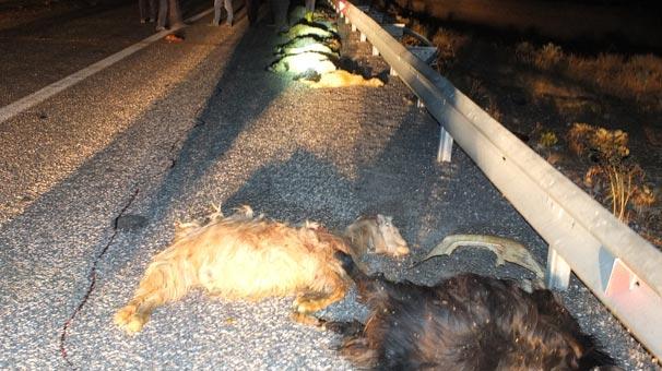 Yer: Elazığ! 32 hayvan bu halde bulundu