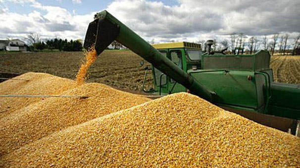 TMO, mısır alımına yarın başlıyor