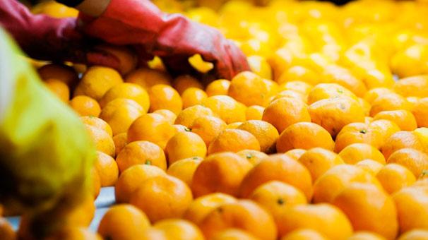 Mandalina ihracatında hedef 400 milyon dolar
