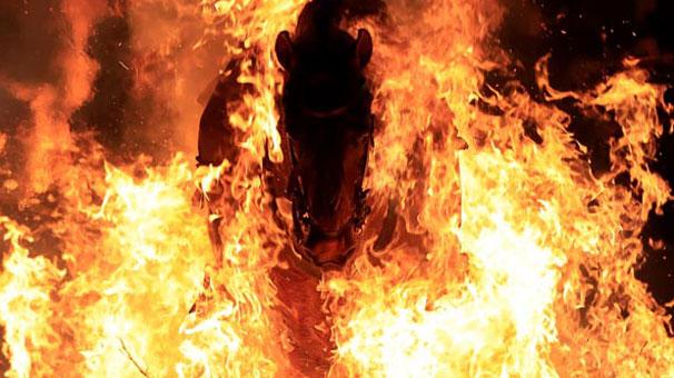 Atlar ateş üstünde yürütüldü!