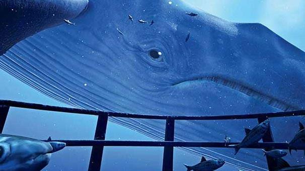 'Mavi Balina' tuzağına dikkat!