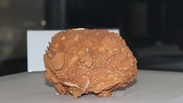 65 Milyon yıllık dev salyangoz
